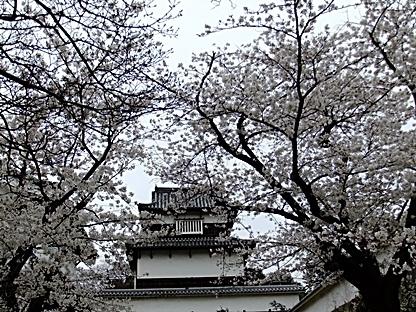 潮見櫓と桜