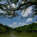 Photos: 薬師池公園