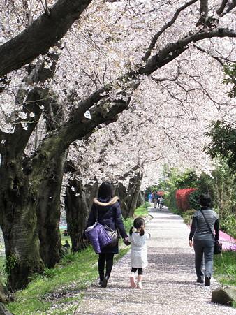 花散らし(三川公園)
