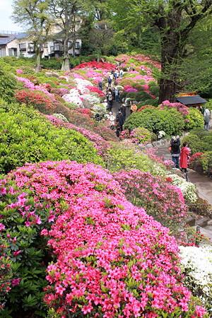 根津神社(5)