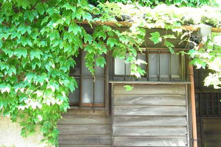 日差しと蔦の古民家