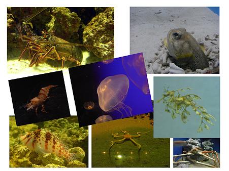 葛西臨海水族園の生き物たち
