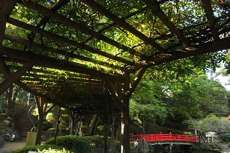 須藤公園の木漏れ日