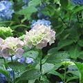 2010/6/27六甲山森林植物園