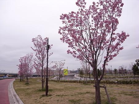 南千住 汐入公園の桜 2010-3-28 21