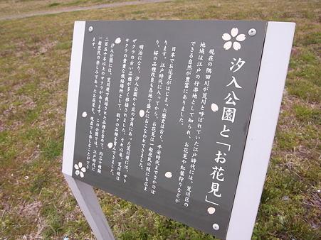 南千住 汐入公園の桜 2010-3-28 31