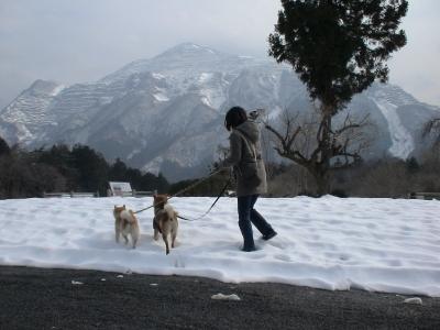 一面雪景色