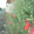 写真: RIMG8361