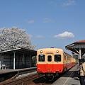 写真: 小湊鉄道の桜 2010 03