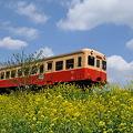 写真: 小湊鉄道の桜 2010 08