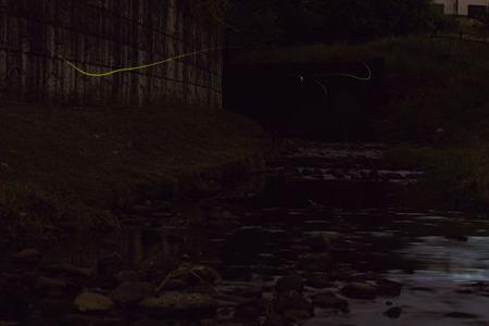 宝来橋のホタル 06