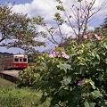 写真: 秋の小湊鉄道2010 02