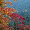 紅葉の彩り