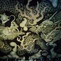 写真: 建仁寺双竜図